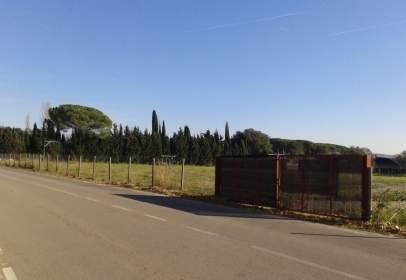 Terreny a Sant Pere de Vilamajor