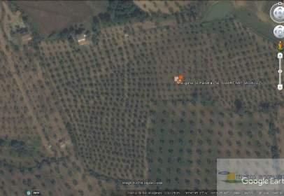 Rural Property in Parajemesapalomo