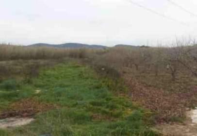 Land in Antella