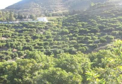 Rural Property in Pueblonuevo