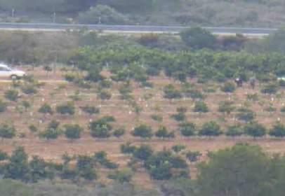 Promoción de tipologias Terreno en venta BENLLOCH Castellón